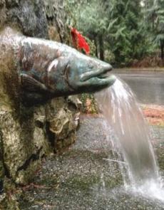 Salmon by Leslie Buerschaper